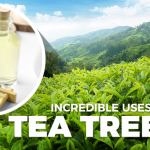 8 Reasons Why Tea Tree Oil Should Have A Place In Every Home