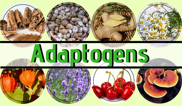 What Adaptogens Are Used in Moon Milk?