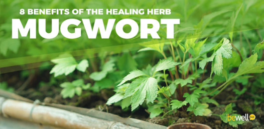 Mugwort: All You Need to Know About This Healing Herb
