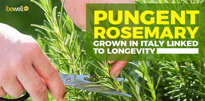 Pungent Rosemary Grown in Italy Linked to Longevity
