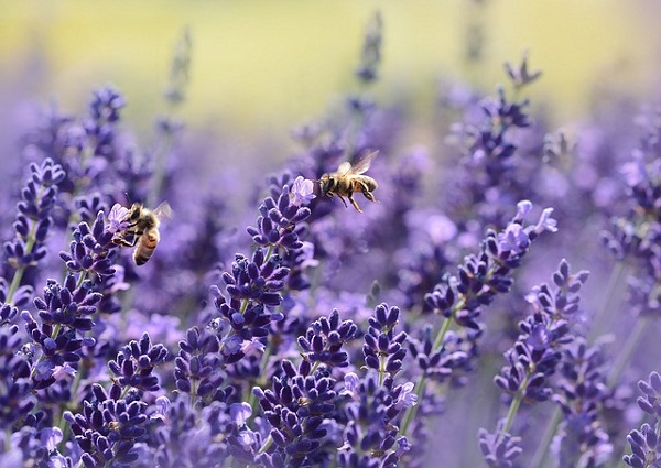 Lavender is universally known as the anti-anxiety fragrance.