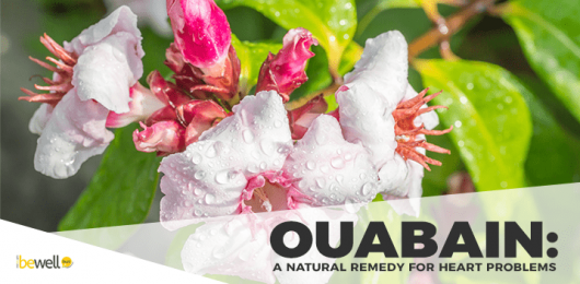 Ouabain: A 150-Year-Old Natural Treatment for Heart Disease