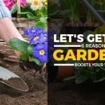Why Gardening Is The Best Hobby For Your Health And Social Life